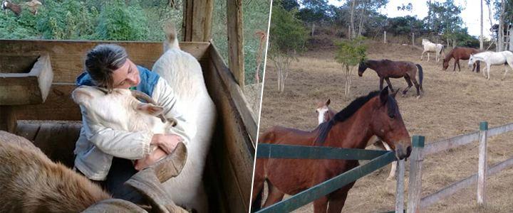 ong-que-ajuda-animais-realiza-campanha-para-arredar-fundos
