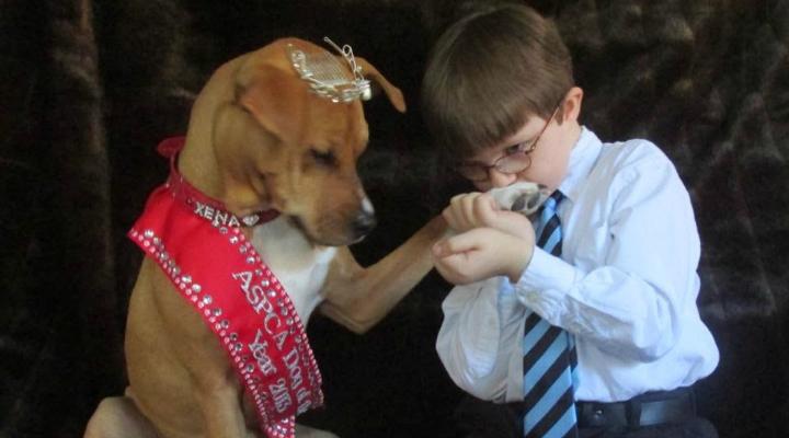 Pit Bull condenada à morte é adotada e ajuda criança autista