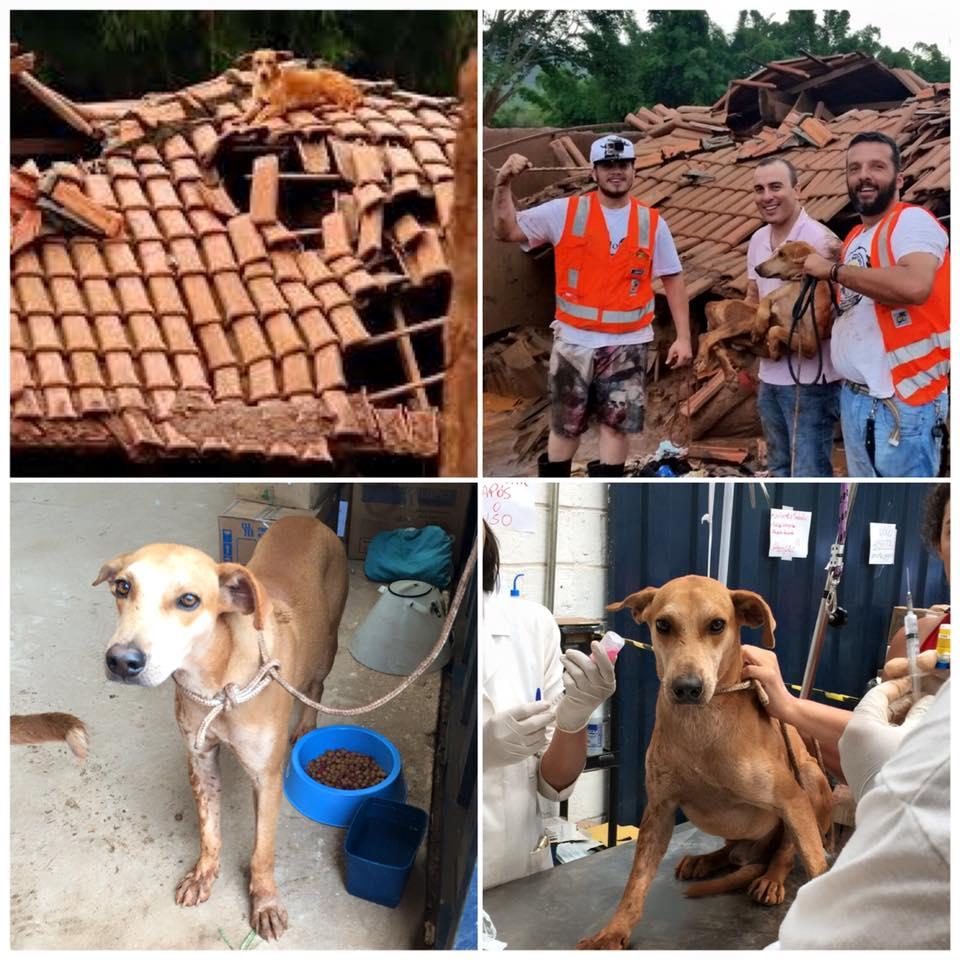 Rafael Leal no resgate de um cão em Mariana (MG)