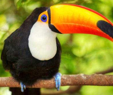 Prefeitura de SP sanciona lei que proíbe abertura de novos zoológicos