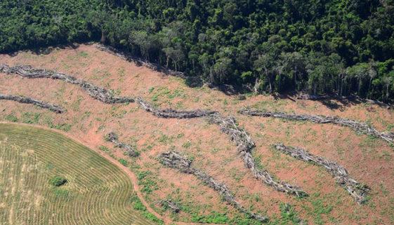 Brasil é o país com a maior perda florestal da última década