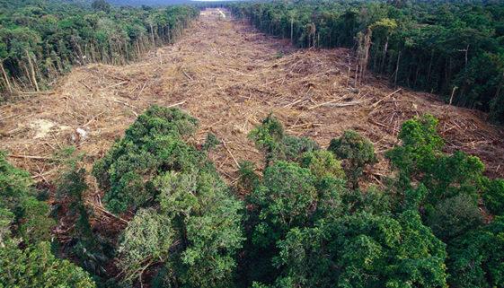 Greenpeace divulga relatório sobre desmatamento e violência no BR