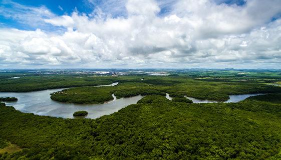 Na Amazônia, projetos de conservação de florestas estão paralisados