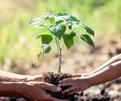 O que é sustentabilidade, você sabe?