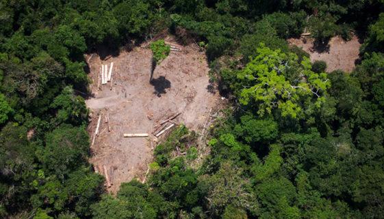 Desmatamento na Amazônia aumentou 85% em 2019, diz INPE