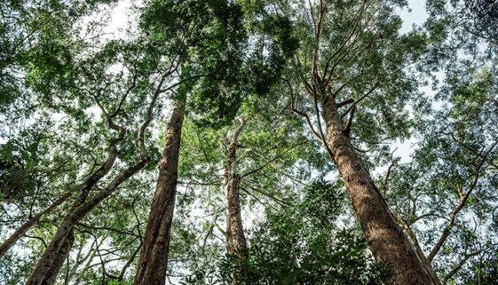 Campanha destaca importância de preservar florestas brasileiras