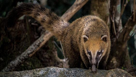 Campanha destaca a necessidade de se preservar espécies em extinção