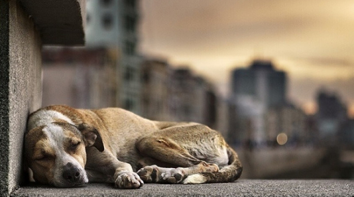 animais abandonados