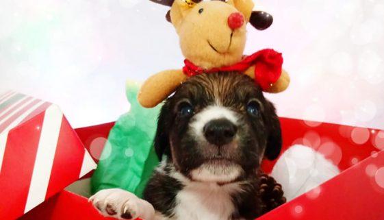 OSC faz ensaio para incentivar a adoção de pets em São Paulo