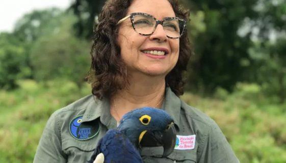 Bióloga que ajudou a livrar arara azul da extinção é indicada a prêmio