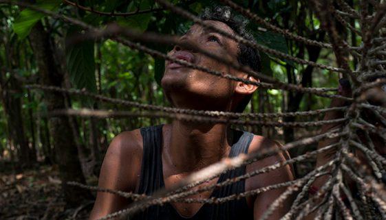 Parte da colheita de açaí é feita por crianças e adolescentes no Pará