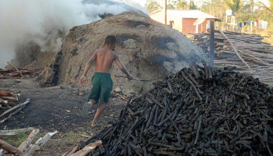 Infância cruel: Brasil tem 421 denúncias de trabalho escravo infantil