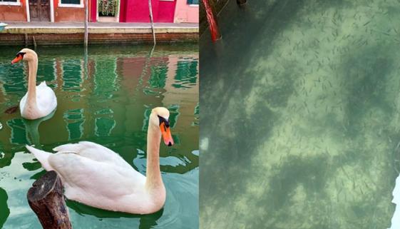 Sem turistas, águas de Veneza voltam a ficar cristalinas