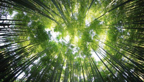 Premiação reconhecerá projetos de estudantes para preservar florestas