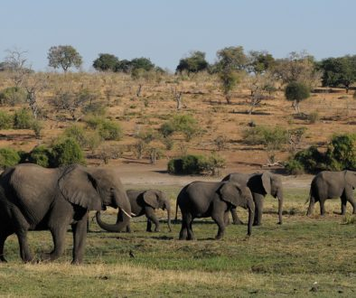 Mistério nas mortes de 360 elefantes em Botsuana, na África