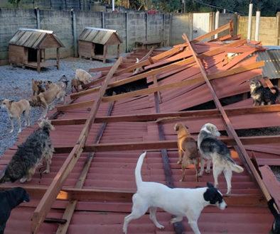 Temporal destrói telhado e muros de abrigo para cães