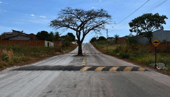 Cidade no Tocantins preserva árvore no meio de avenida