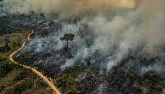 Amazônia registra em junho o maior número de incêndios desde 2007