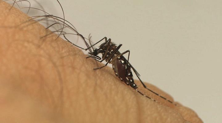 Acúmulo de doenças: Brasil tem mais de 1 milhão de casos de dengue