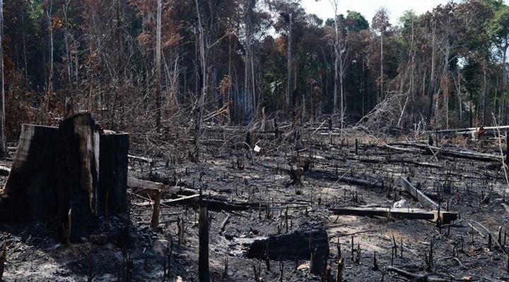 Coalizão apresenta medidas para redução do desmatamento no Brasil