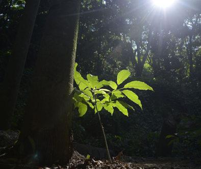 Organizações ambientais se unem para restaurar áreas florestais