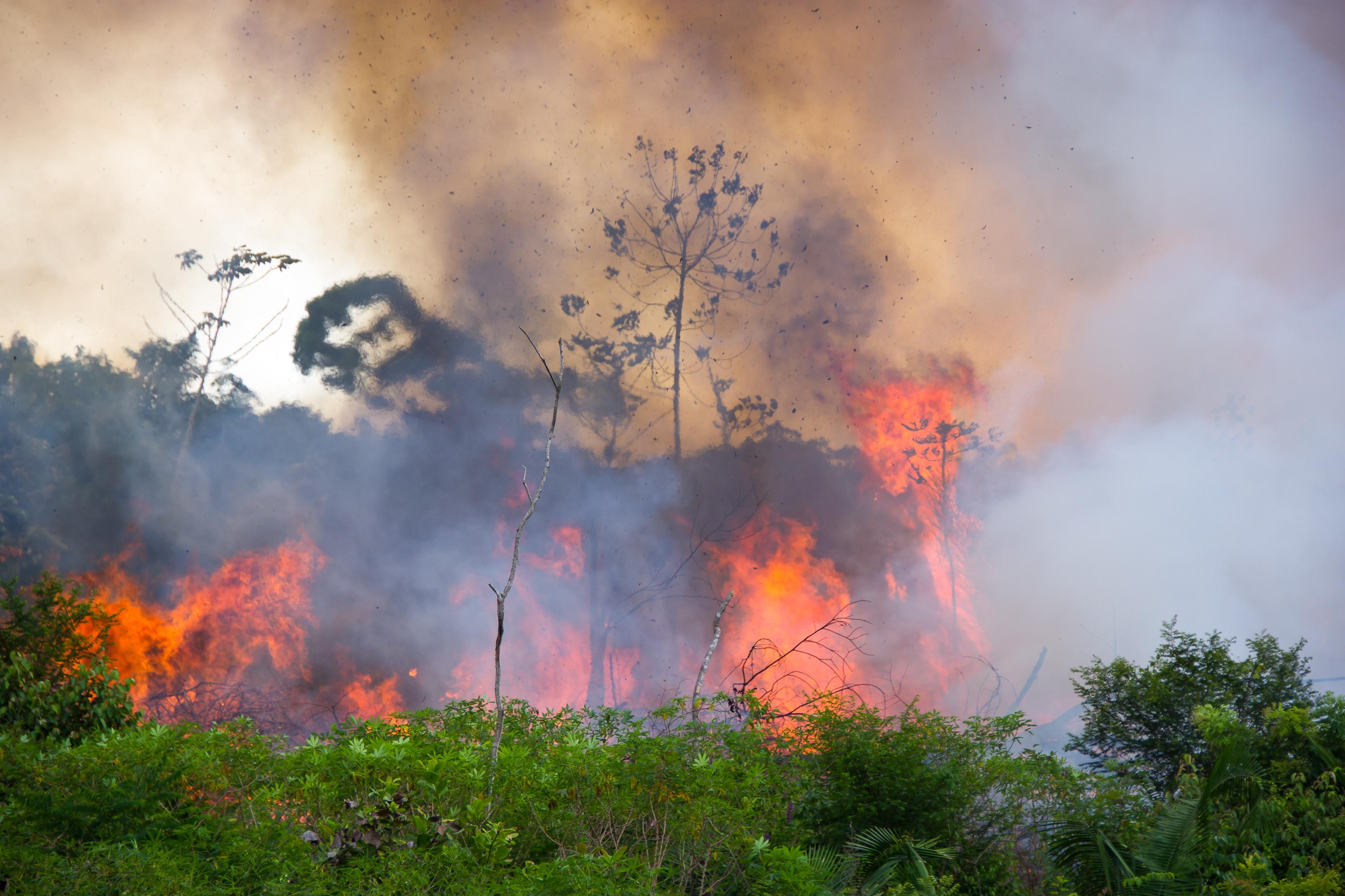 Amazônia queima e Exército gasta milhões em simulação de guerra na floresta