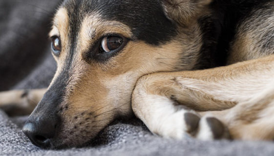 Cobasi realiza evento para ajudar ONGs de proteção animal