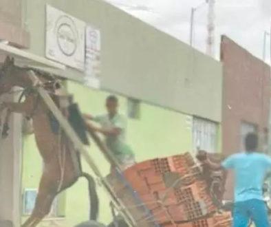 Crueldade: burro fica suspenso com peso que o colocaram para carregar
