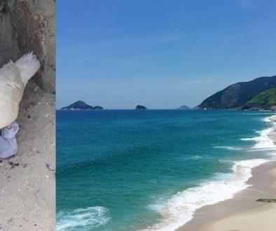Pato é encontrado na praia da Macumba usando meias e crucifixo